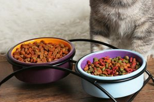 кот не ест сухой корм