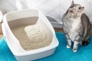 мутная моча у кошки