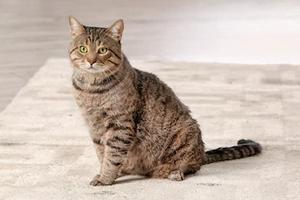 мутный цвет мочи у кошки с запахом