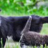 Из-за чего у кошки может опухнуть хвост?