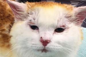 ожог у кошки от йода