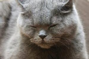 Панкреатит – основные признаки заболевания у кошек, особенности лечения