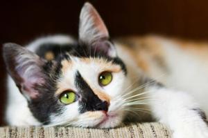 панкреатит у кошки признаки