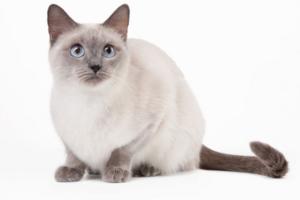 Профилактика заболеваний у кошек