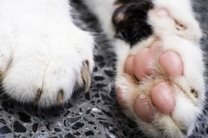 у кошки горячие лапы и теплый нос