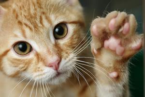 у кошки горячие подушечки лап