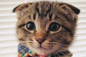 у кошки холодные уши и нос