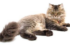 у кошки идет кровь из соска после удара