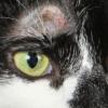 Что делать, если у кошки появилось красное пятно над глазом?