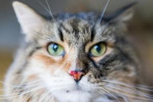 у кошки кровь из носа при падении