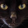 Из-за чего у кошки может почернеть нос?