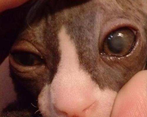 у котенка гноится глаз
