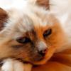 Что делать, если кошка стала вялой?