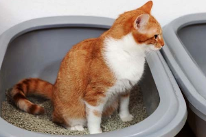 желтая слизь в кале у кошки