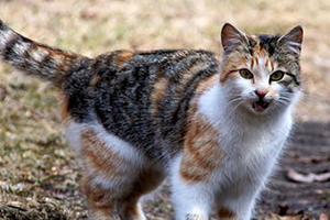 у кошки пропал голос и текут слюни