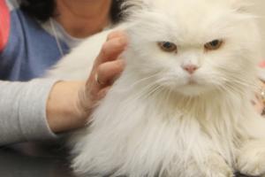 Из-за чего у кошки на ребре может появиться шишка?