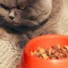 Из-за чего у кошки может снизиться аппетит?