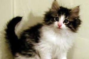 у кошки воняет из под хвостика