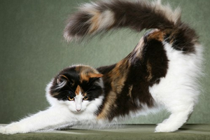 запах у кошки из под хвоста