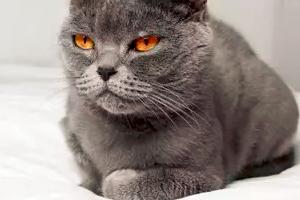 у кошки не разгибается лапа