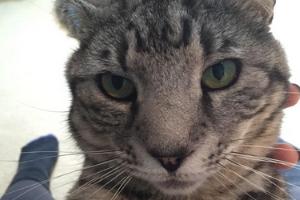 у кошки опух нос и покраснел
