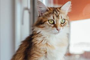 у кошки трясется нижняя челюсть и слюны нет