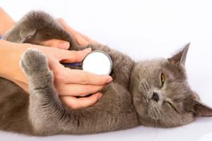 Из-за чего кошка может задыхаться?