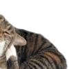 Из-за чего у кошки может чесаться внутри уха?