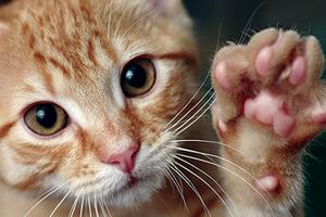 у кошки припухла подушечка лапы